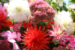 webpicLS-AS-2008-flowers-02-web625w417h.png